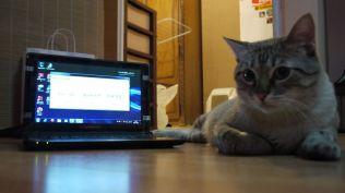 laptop maguay (54)