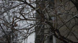 freeezing rain in Bucuresti polei in bucuresti iarna zapada viscol cod portocaliu (32)