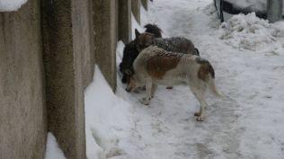 freeezing rain in Bucuresti polei in bucuresti iarna zapada viscol cod portocaliu (82)