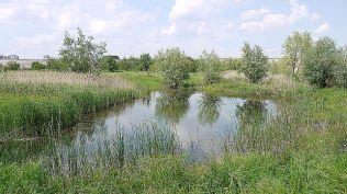 delta bucuresti - lacul vacaresti (520)