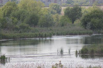 delta bucuresti - lacul vacaresti (566)