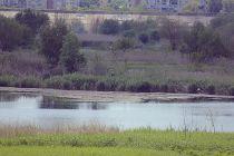 delta bucuresti - lacul vacaresti (71)