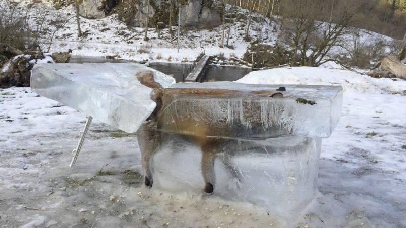 Răzbunarea ursului păcălit de vulpe