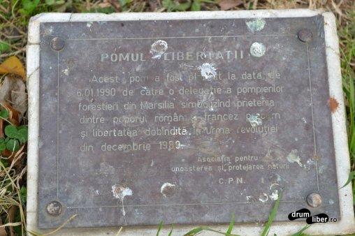 Plăcuța de la Pomul Libertății din Timișoara.