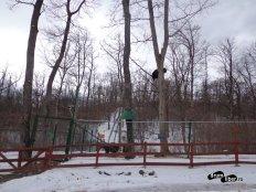 Rezervația de Urși de la Zarnești - Cocoțat în copac