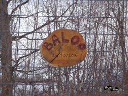 Dacă nu știai unde e Baloo..