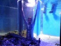 În mijlocul acvariului