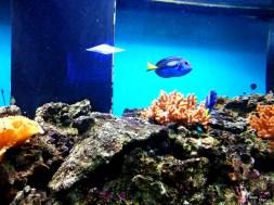 Nemo, unde ești?
