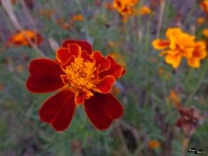 Flori la Turnu