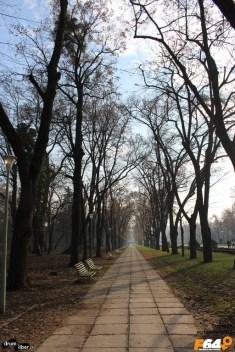 Alee prin parc