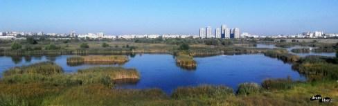 Delta din București