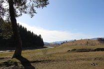 Zimbrii de la Valea Zimbrilor, Vama Buzăului (Acriș)