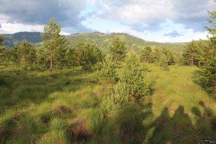 Tinovul Șaru Dornei din Parcul Național Călimani