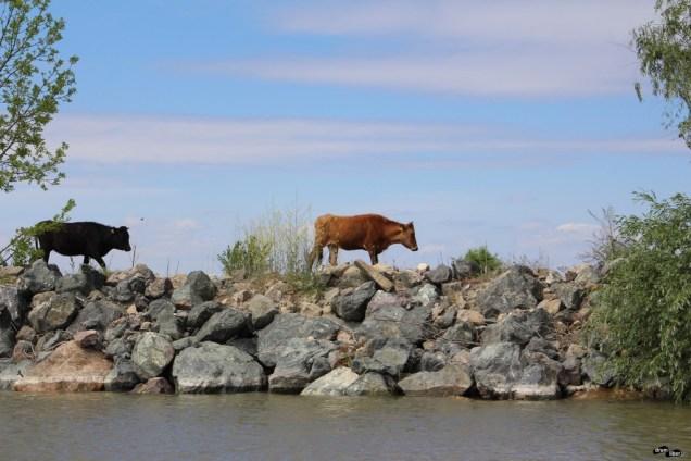 Pădurea Letea, o minunăție din Delta Dunării: cai sălbatici
