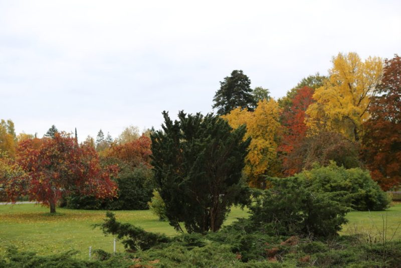 Höst i arboretet