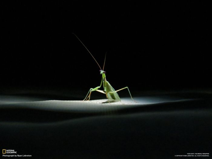 Photos by National Geographic