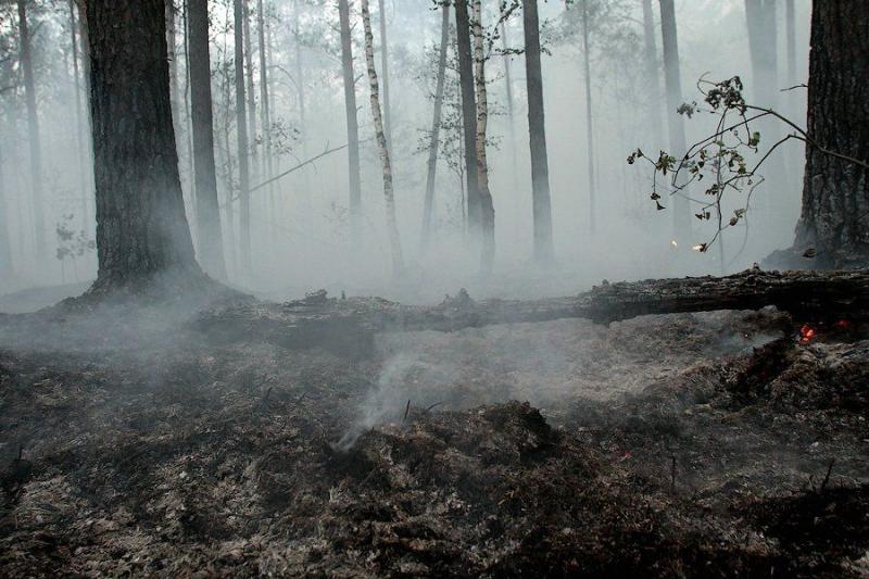 Extinguishing Wildfires 13