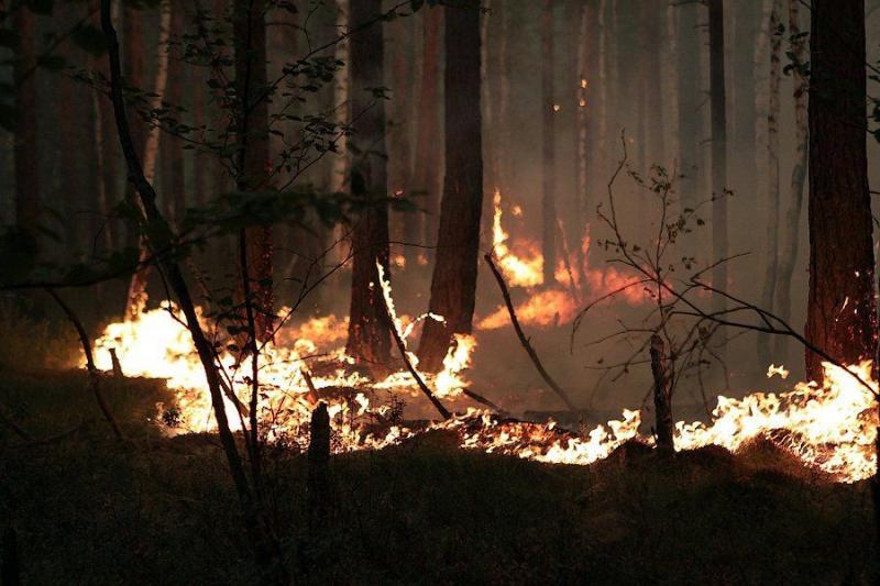 Extinguishing Wildfires 15