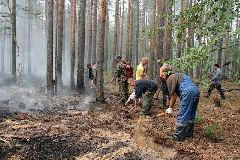 Extinguishing Wildfires 20