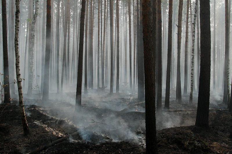 Extinguishing Wildfires 27