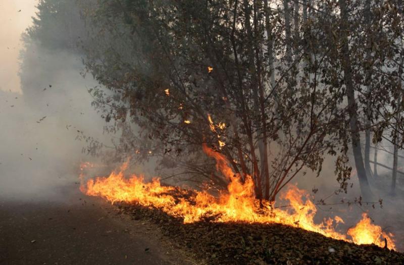 Extinguishing Wildfires 81