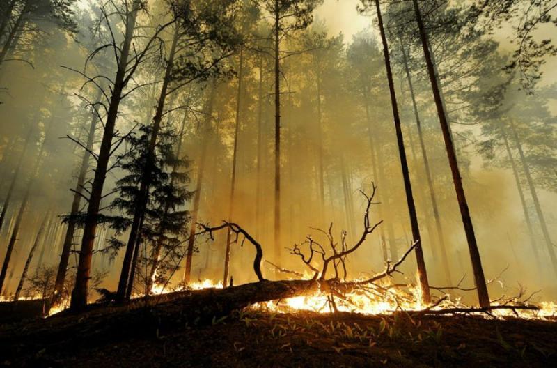 Extinguishing Wildfires 83
