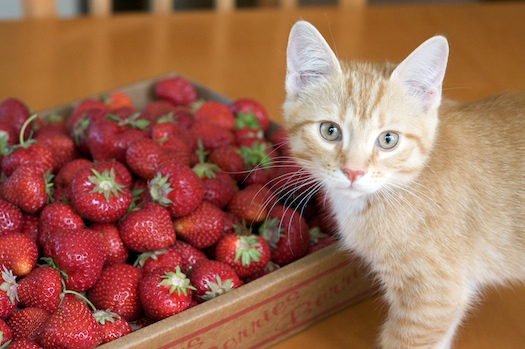 Watson and the Strawberries
