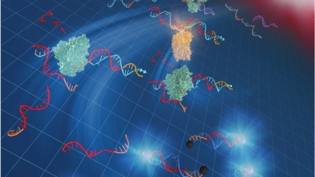 A rapid, easy-to-use DNA amplification method at 37°C
