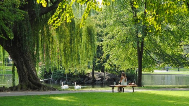 Hot urban temperatures and tree transpiration