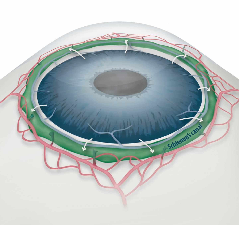 Ocular Anatomy And Function Lab 2 7 Eye Lab Flashcards Memorang