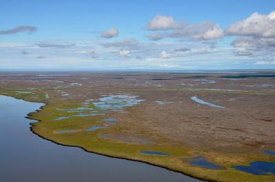 Arctic Coastal Study -- Dead Vegetation from Air