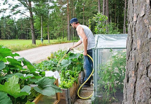 Johannes Wätterbäck vattnar pallkragarna i skogsträdgården Farbror Grön