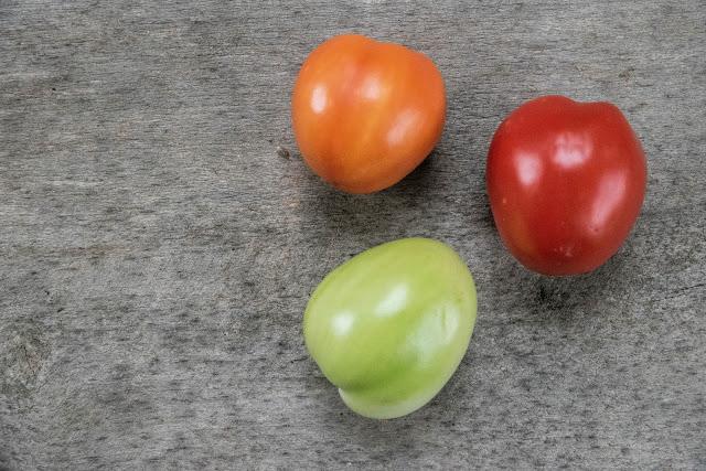 Tomat i tre mognadsfaser Farbror Grön
