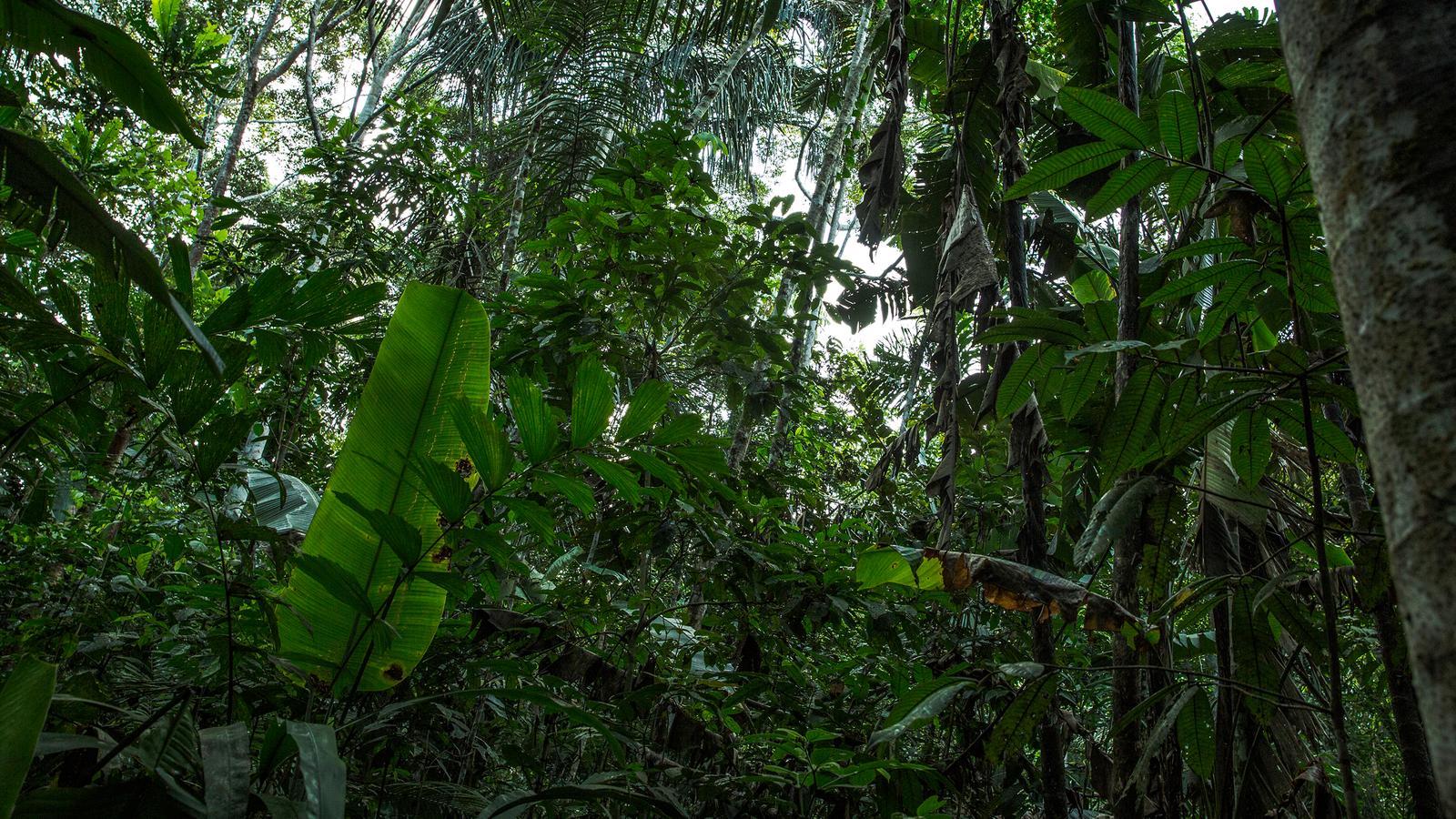 Anden Amp Amazonas In Ecuador Sudamerika