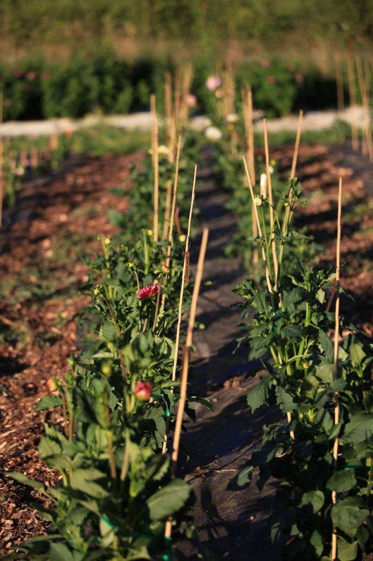 Dirty Secrets 9 Ways To Improve Garden Soil Gardenista