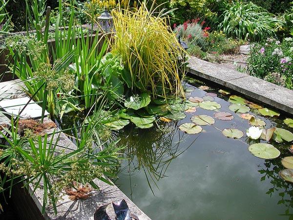 installer un bassin de jardin les