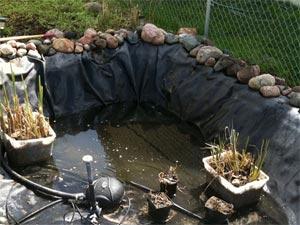 comment vidanger un bassin de jardin