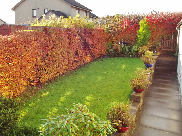 amenager un jardin en longueur