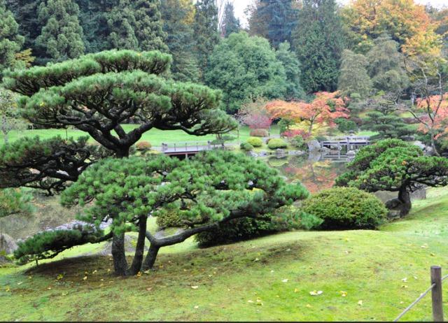 les niwaki arbres du jardin japonais