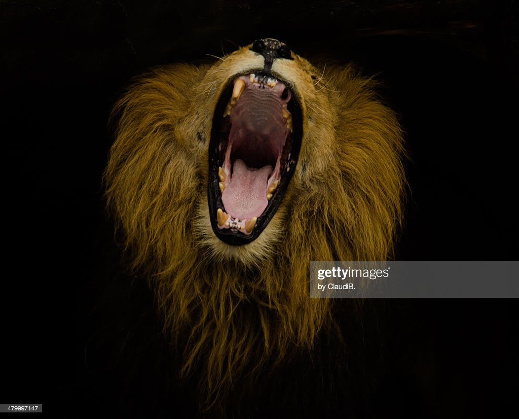 Side Jumping Roaring View Lion