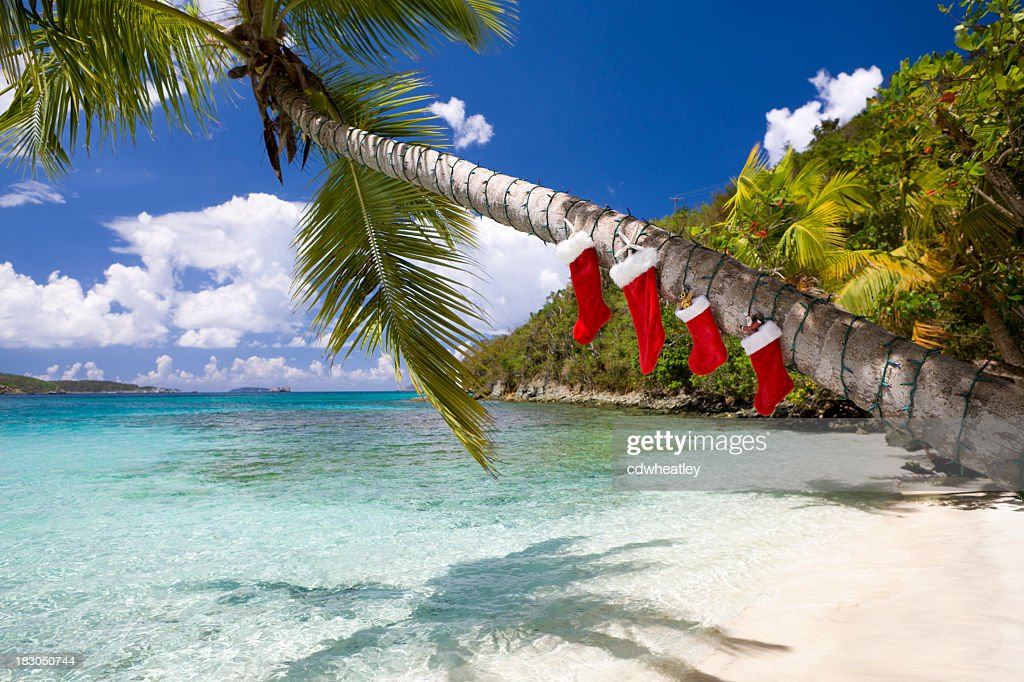 Christmas Decorations On A Palm Tree At The Caribbean