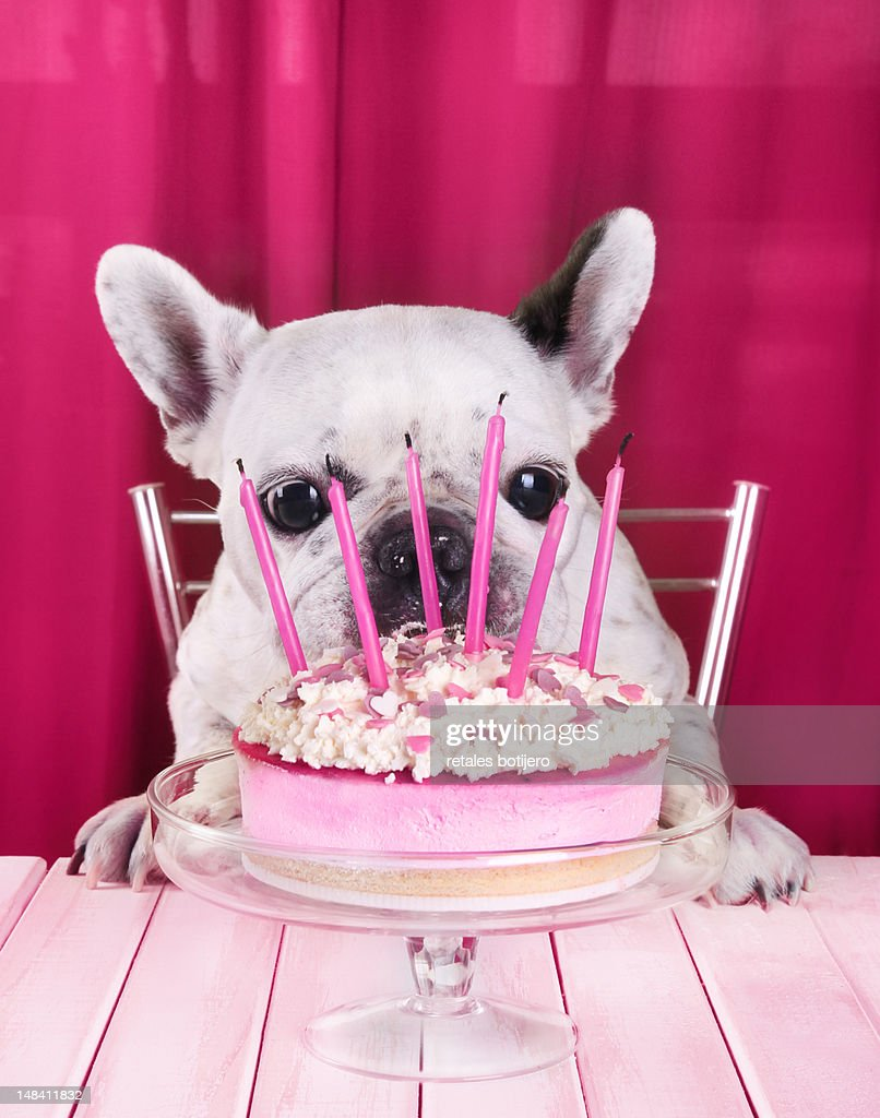 Funny Birthday Cake Photos And Premium High Res Pictures Getty Images