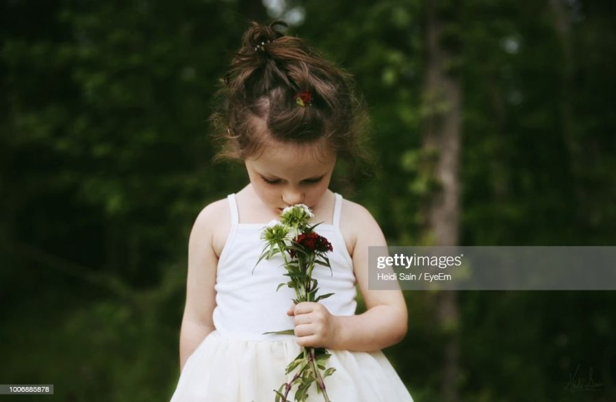 Sain Stock Photos and Pictures   Getty Images Girl Holding Flower Against Trees