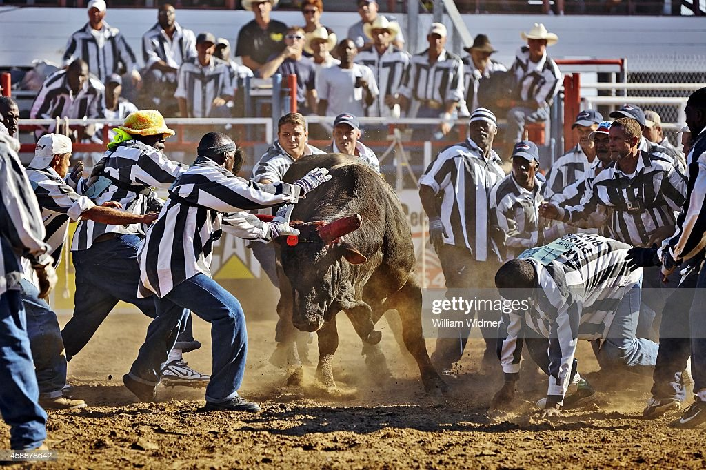 2014 Angola Prison Rodeo Pictures Getty Images