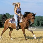 Young Lady Riding Westernstyle Galloping On Arabian Horse In A Stubble Field At Late Summer High Res Stock Photo Getty Images