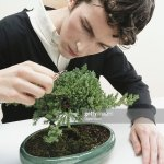 Young Man Pruning Bonsai Tree With Nail Scissors Closeup High Res Stock Photo Getty Images