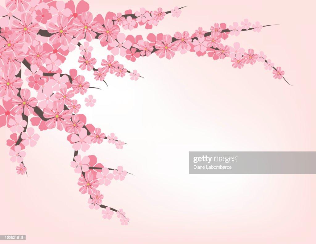 Illustrations Cliparts Dessins Animes Et Icones De Fleur De Cerisier Getty Images