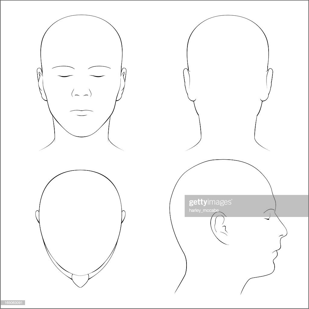 Human Head Surface Anatomy Outline stock vector | Getty Images