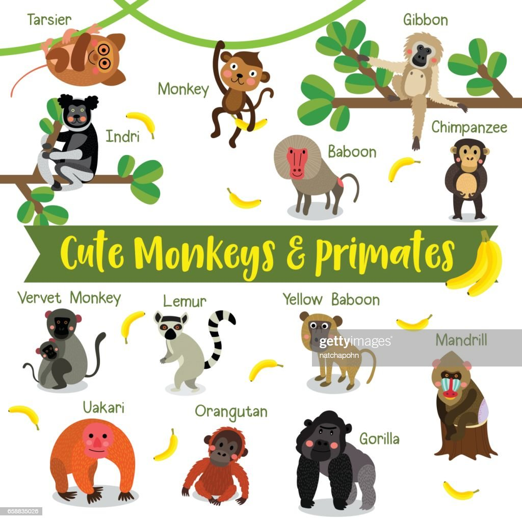 Image of: Monkey And Primate Animals Cartoon With Animal Name Vector Illustration Thinkstock Monkey And Primate Animals Cartoon With Animal Name Vector