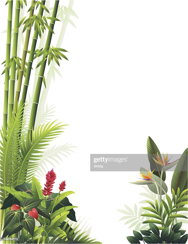 https www gettyimages fr illustrations bambou